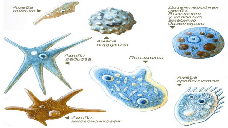 Организмы регулируют свои метаболические процессы