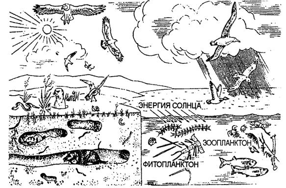 Рост, развитие, размножение и адаптация организмов