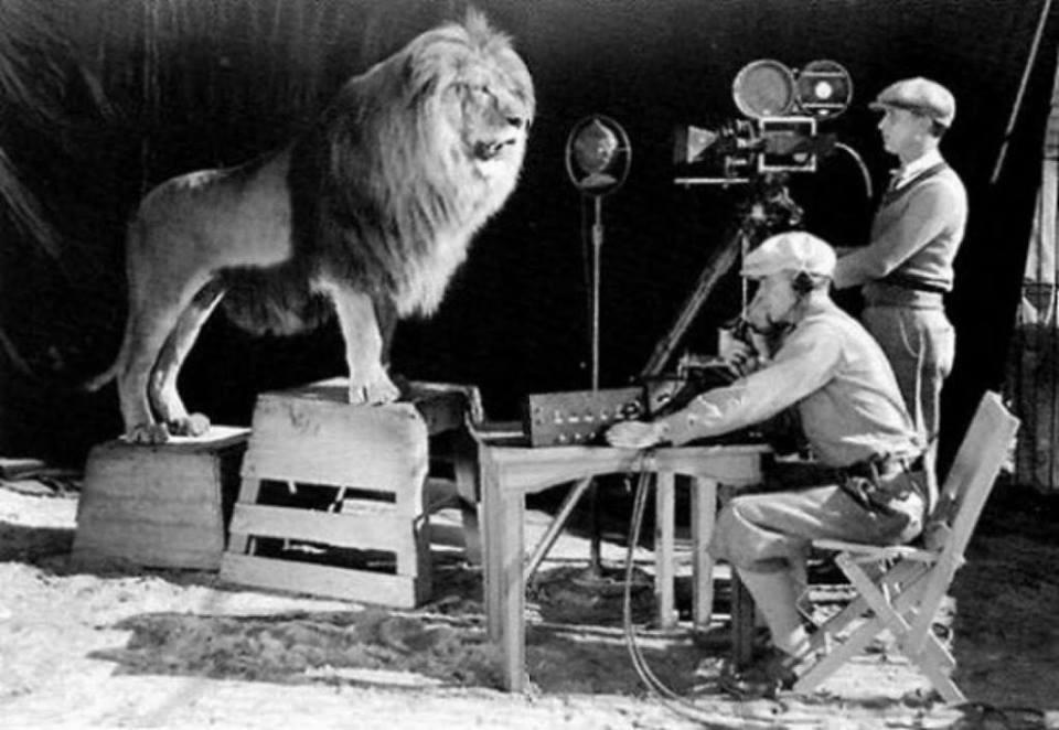 16. Filmando a Leo el León para para el clásico logo de MGM.