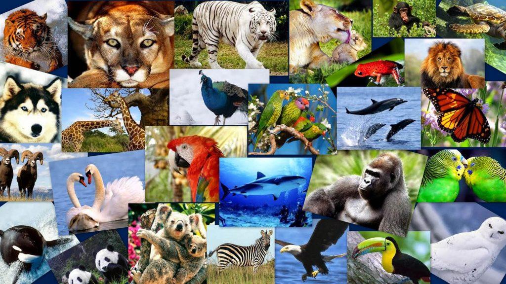 Характеристики живых существ