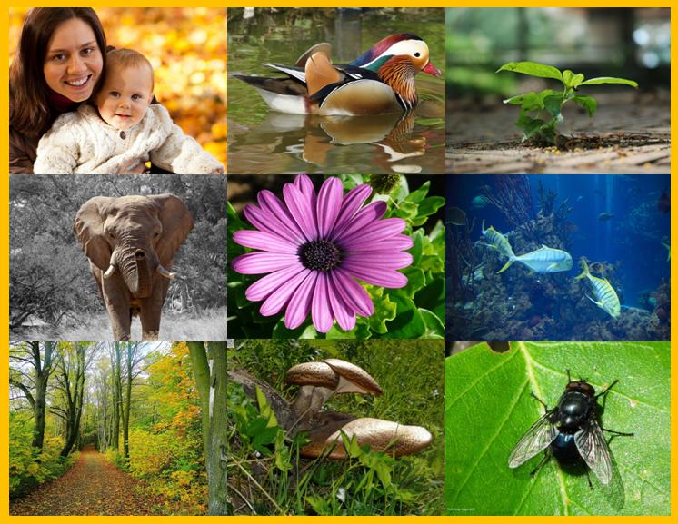 5 características de los seres vivos