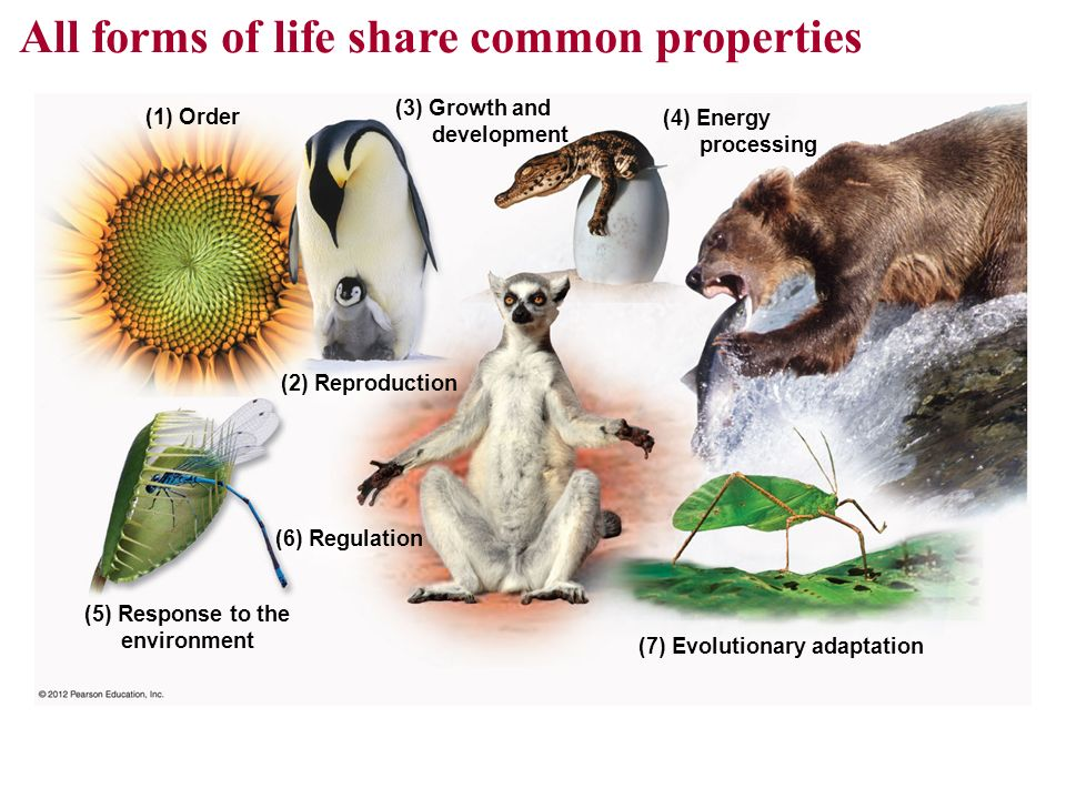 Growth, development, reproduction and adaptation of organisms