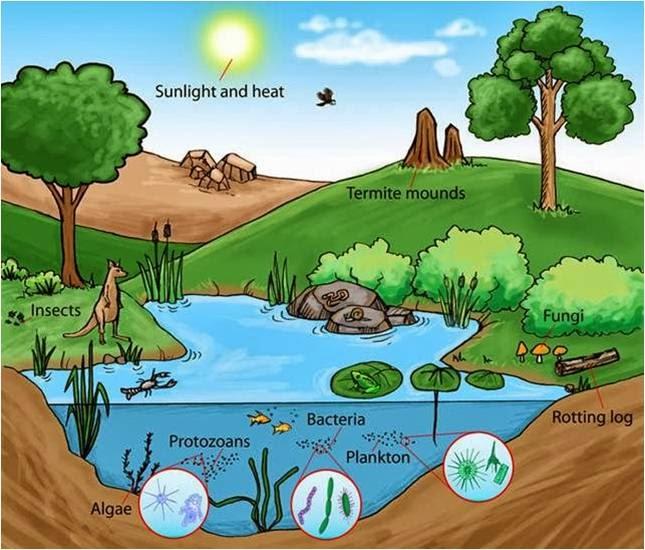 Os organismos se adaptam ao seu ambiente.