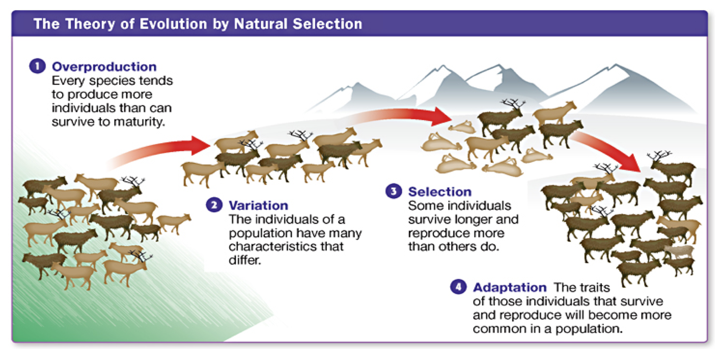 Populations evolve and adapt to their environment.