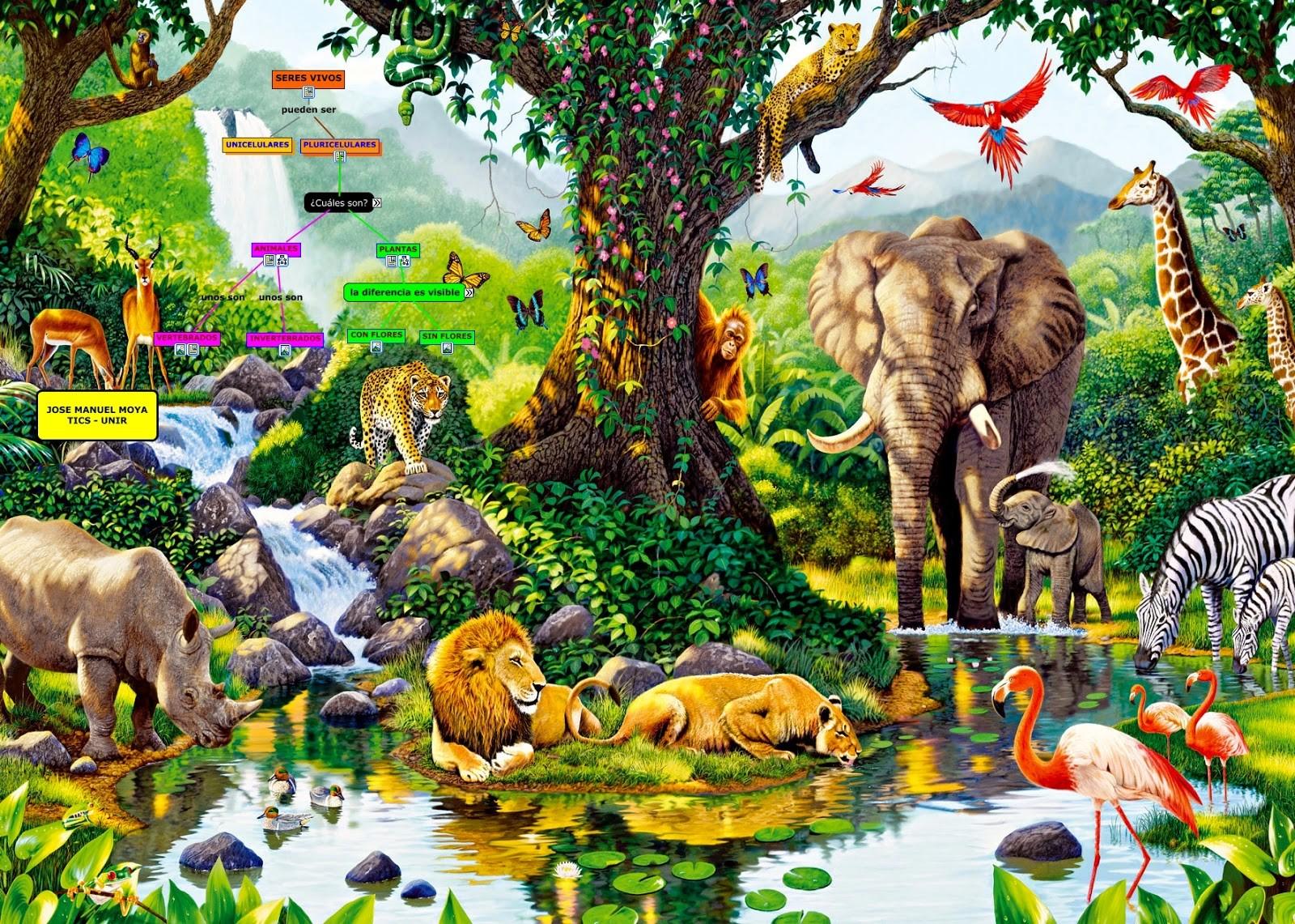 Seres vivos plantas y animales