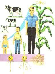 los organismos crecen y se desarrollan