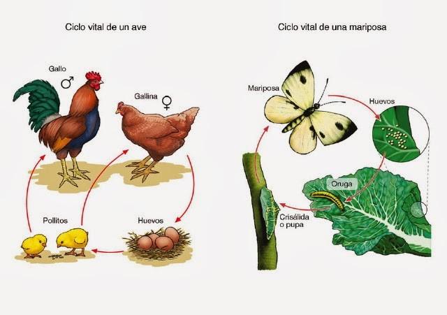 reproducción de los organismos